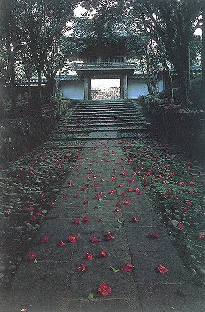 「落花の参道」 小林則男さん(鯖江市)