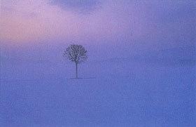 「霧に佇む」 大南栄男さん (敦賀市)