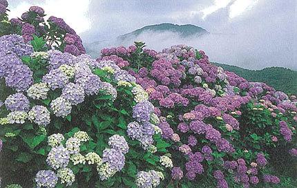 「梅雨に咲く」 廣部保和さん(敦賀市)