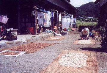 「母の収穫」 三國 清さん (勝山市)