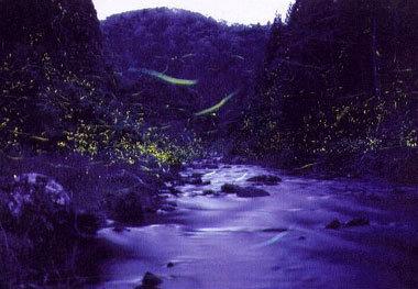 「ふるさとの川に舞う」 知見 治さん (おおい町)
